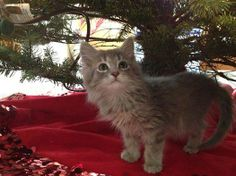 16 Best Lost & Found Pets images in 2014   Find pets, An eye
