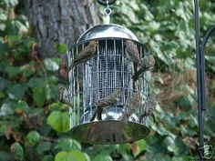 Squirrel Proof Bird Feeder, Stainless Steel