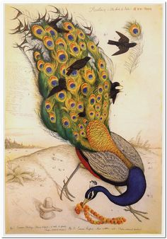 The Birds of India (1996) by Walton Ford