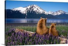 Grizzly sow and cub sit on log and view Turnagain Arm, Alaska