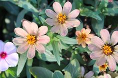 Wild flowers group