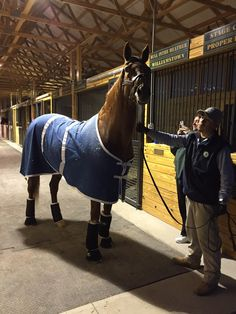 @Oldfriendsfarm  Thank you to @salleehorsevans for bringing CHARISMATIC safely home!