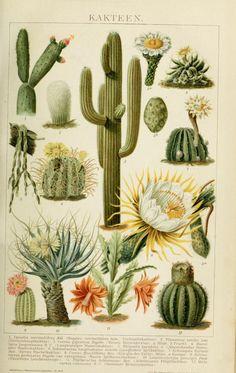 Vintage Botanical Prints, Botanical Drawings, Botanical Art, Vintage Botanical Illustration, Vintage Prints, Vintage Posters, Vintage Art, Botanical Posters, Photo Wall Collage