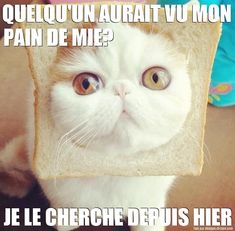 chat pain de mie