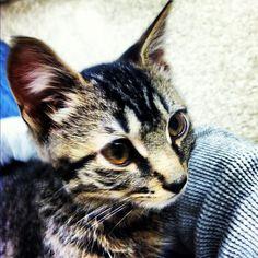 Ariel • Barnaby at PetSmart WLB