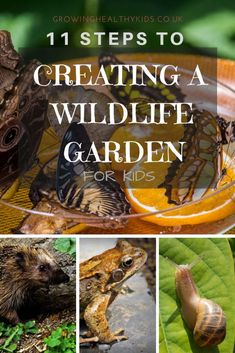 Ideas for attracting wildlife to your garden. How to make small habitats with your children, plant trees and plants that your wildlife will love. so design your space now to attract everything from birds to bugs art design landspacing to plant Organic Gardening, Gardening Tips, Indoor Gardening, Gardening With Kids, Allotment Gardening, Fairy Gardening, Hydroponic Gardening, Vegetable Gardening, Garden Animals