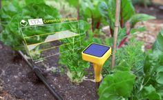 The Edyn Garden Sensor is a device that will monitor the soil conditions, weather, and moisture in the air and in the ground, and from the data, gives advice and suggestions so that anyone can cultivate a great garden. Edyn will even pick out which plants will thrive the best according to the data collected.