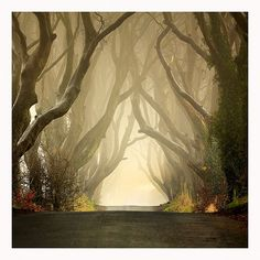 Dark Hedges, Ireland.  I don't think I would walk down that road alone it looks kind of eerie, but awesome at the same time