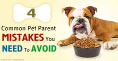 Common pet owner mistakes involve feeding, punishment and training, collar and leash selection, and routine pet care chores. http://healthypets.mercola.com/sites/healthypets/archive/2015/06/27/common-pet-owner-mistakes.aspx