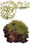 The right aquarium plants - Tropica Aquarium Plants- Medium difficulty