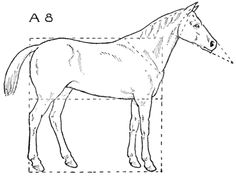 Step 08 horses How to Draw Horses with Easy Step by Step Drawing Lessons