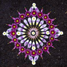 mandala pétales de fleurs