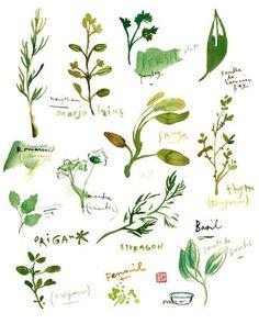 Frische Kräuter-Aquarell, Küche Kunstdruck, Food-Poster, Kulinarik, botanischen Kräutern, grün, Gewürze Thymian Basilikum, Gartenpflanzen