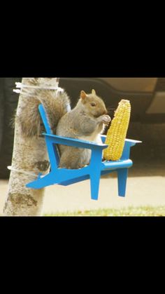 Chair squirrel feeder
