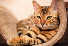 katt-myser