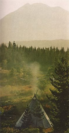 Gifford Pinchot National Forest, Washington (1971) I live on the edge of this forest in the little town of Yacolt.