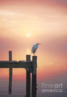 Foggy Sunset on Egret - Fine Art Print    A Snowy Egret resting on a dock surrounded in thick fog and mist in Swansboro, North Carolina just before sunset.    Fog, Sunset, Egret, Snowy Egret, Water Reflection, Mist, Moody Art, Mysterious, Mystical, Magical, Serene, Calming,  Swansboro, North Carolina, Harbor, Bogue Inlet, Bogue Sound, Pier, Dock, Marsh, Wetlands,  Tranquility, Tranquil, Serenity, Coastal, Salt Water, Salt Life, Coastal Living, Coast, Beach, Beach Life