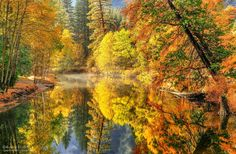 Golden by Aaron Reed - Photo 40648270 - 500px