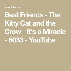 bd2daa8a8 Best Friends - The Kitty Cat and the Crow - It's a Miracle - 6033