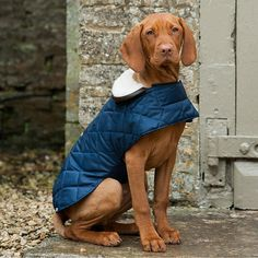 quilted waterproof dog coat by mutts & hounds | notonthehighstreet.com