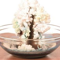 Impress your friends by creating a colorful Christmas tree out of salt crystals, cardboard, and a few other household items. Within a day, you'll have a colorful snow-covered tree that seemed to magically sprout from nothing!     Cool Science experiement~