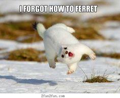 I forgot how to ferret