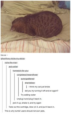 This is how I feel every day. funny tumblr comment cat broke LOL