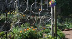 i really like the idea of old bike wheels in  my garden.   this is a great use for them.