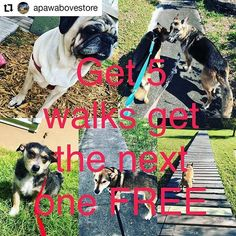 Credit to @apawabovestore  TODAYS PROMO !!! Buy 5 walks get your next one FREE!!! Call 754 210 7387 or message me  #messageme  #doggiewalks #puppys #apawabove #dogstagram #pugs #pitbull     #HollywoodTapFL #HollywoodFL #HollywoodBeach #DowntownHollywood #HardRockHolly #Miami #FortLauderdale #FtLauderdale #Dania #Davie #DaniaBeach #Aventura #Hallandale #HallandaleBeach #PembrokePines  #Miramar #CooperCity #Plantation #SunnyIsles #MiamiGardens #NorthMiamiBeach #Broward