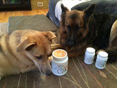 Meet Roofus + Foster. #Pets love #Nutiva #CoconutOil nutiva.com #RoofusFoster #dogs
