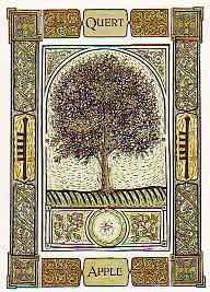 """Apple is a great wood for a magickal wand. It is a favorite witch tree. The fruit is used at Mabon and Samhain, and for love spells. Eating an apple opens the gateway into other realms, most often faeryland. It provides illumination and the gaining of knowledge. Dreaming of apples symbolizes prosperity and the good would be blessed by the Goddess for a year.Apple is also considered one of the foods of the dead, Samhain is sometimes known as the """"Feast of Apples."""""""