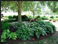 Shade Garden: Hosta