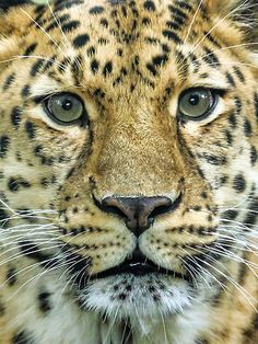 ~~Amur Up Close by Mark Hughes~~
