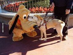 Guide Dog Makes a Friend at Disney World.