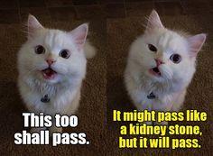 Advice Kitty offers good advice. http://cheezburger.com/9028934144