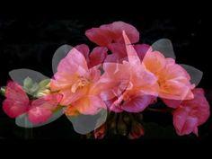Футаж Любой цветок - природы совершенство HD