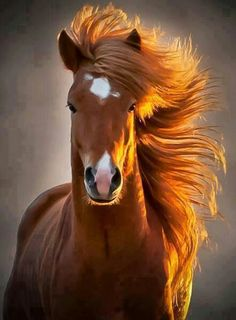 my goal in life is to get my horses mane this long..... its been the same length for 8 years -_-