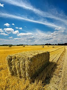 Great photo! Haybail Day, Wisconsin | Phil Koch