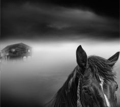 Love me Tender by Vassilis Tangoulis - one for hayley and kiana :-)