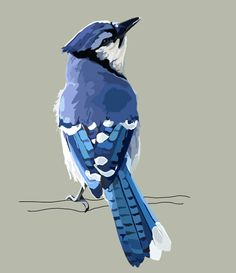 Paula Swisher - Vector Illustration. I knew right away that this was a blue jay. From far away it looks painted. Most of the shapes are organic. The colors are very realistic. I wish the branch at more detail and color.
