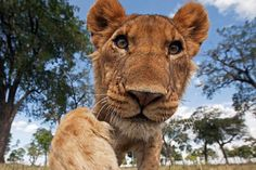 TOP 10: ¡¡¡Selfies de animales!!! – La voz del muro