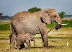Nairobi Day Tours Safaris to Kilimanjaro, Amboseli, Nakuru, Longonot, National Park Tours, National Parks, Tanzania Safari, Kilimanjaro, African Safari, East Africa, Day Tours, Day Trip, Scenery