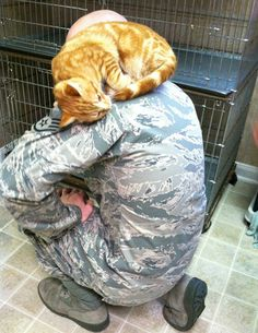cat chooses soldier to go home to. This just wants to make me cry because it just looks so sweet!