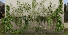 http://yumiaplace.tumblr.com/post/159363595605/realistic-wall-plant-wall-decoration-cuz-i    Realistic Wall Plant by Yumia