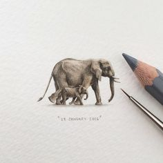 Day : The elephant's gestation period is 22 months – longer than any other land animal in the world, and a newborn elephant baby can weigh up to 260 pounds. Detailed Paintings, Mini Paintings, Mini Drawings, Art Drawings, Newborn Elephant, Polychromos, Animals Of The World, Art Plastique, Street Art