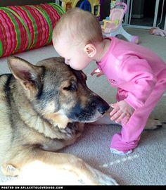 Cutest Doggie Kiss #german #shepherd #dog