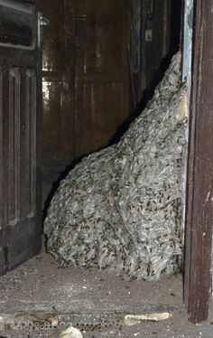 Wasp Nest Found in Abandoned House