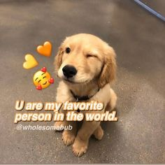 Cute Love Memes, Funny Love, Charles Meme, Pick Up Line Jokes, Wholesome Pictures, Cute Messages, Cute Texts, Relationship Memes, Wholesome Memes