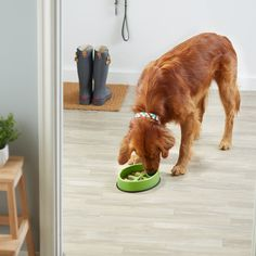 AmazonBasics Honeycomb Dog Slow Feeder Bowl for AntiBloating >>> See this great product. (This is an affiliate link) #automaticdogfeeder