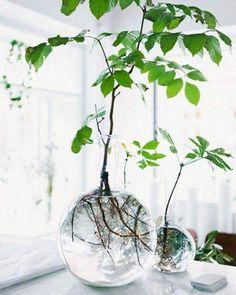 Glass jar Indoor garden inspiration